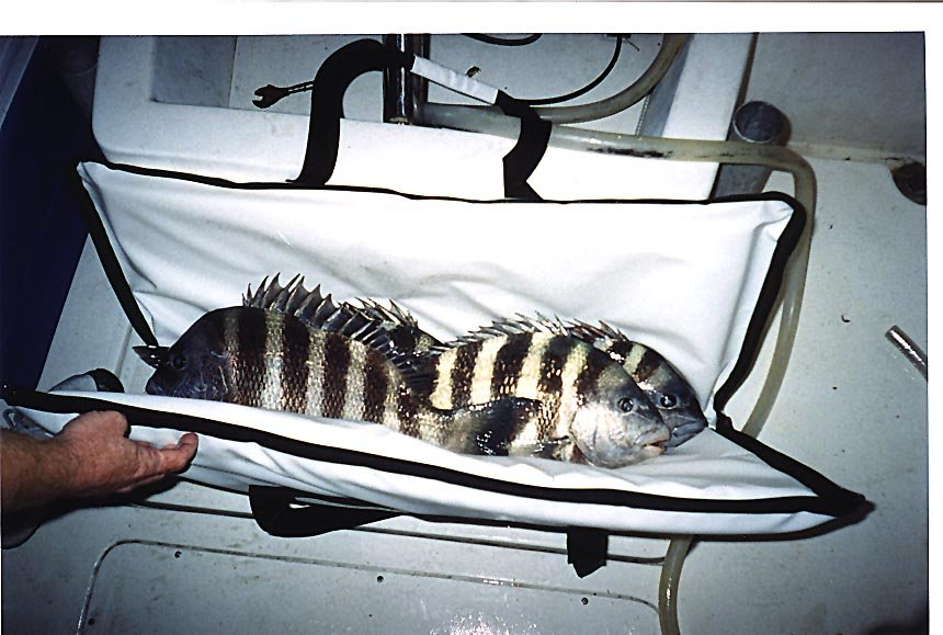 Ins Bag With Fish Jpg