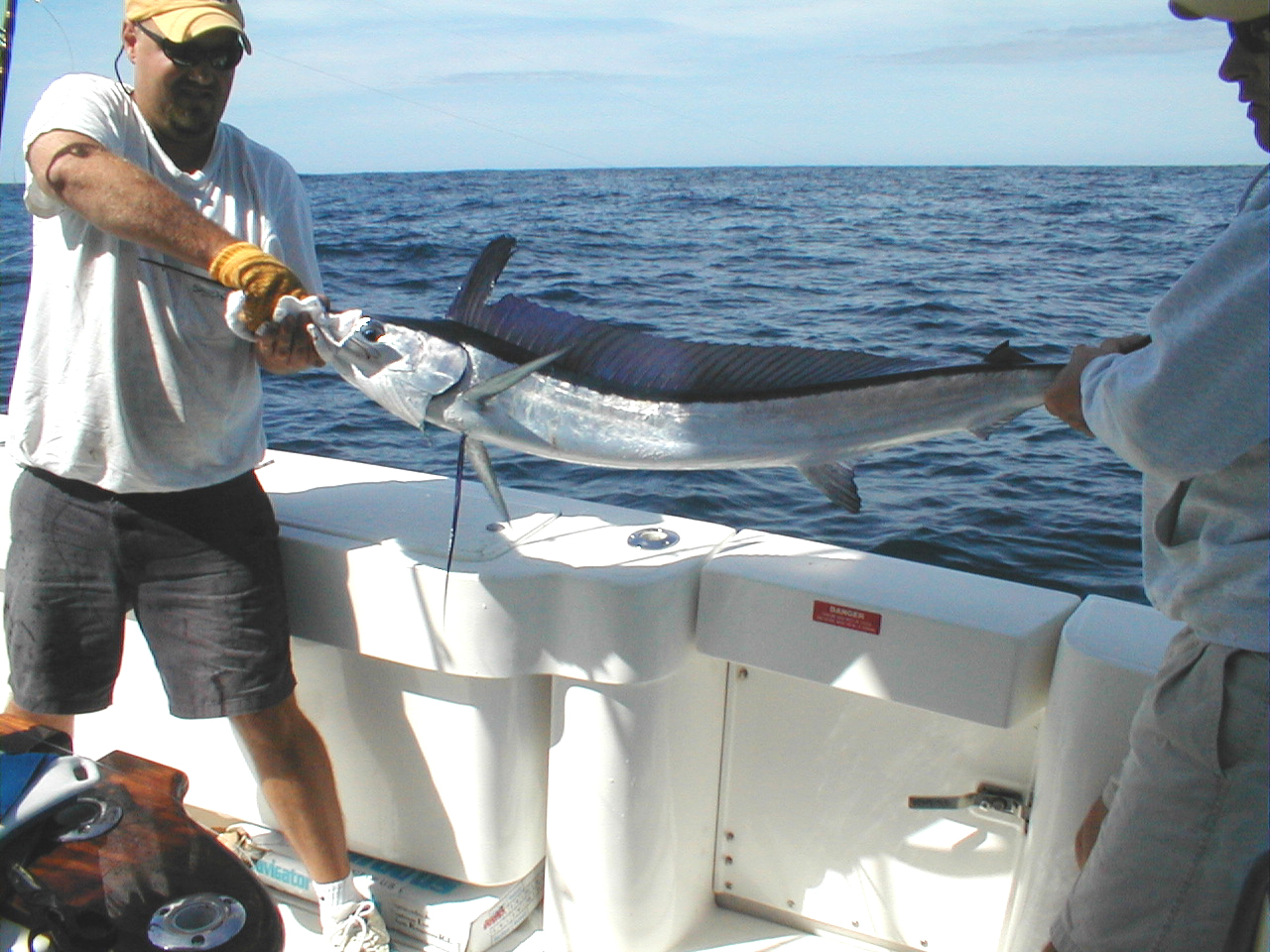 longbillspearfish2.jpg