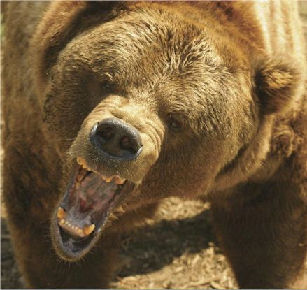 yeti-grizzly-bear-rour.jpg